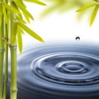 Bamboo with pool of water rippled by a single drop of water