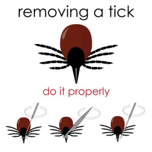 Diagram on how to appropriately remove a tick