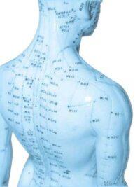 Energy-Medicine-Report acupuncture model blue