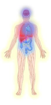 Drawing of persons nervous system with liver problems