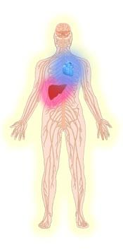 Drawing of persons nervous system with heart and liver problems