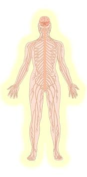 Healthy nervous system drawing in yellow